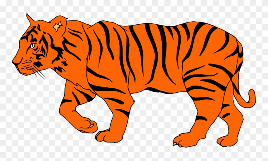 Tiger png clipart royalty free stock White Tiger Clipart Depauw - Illustration Of A Tiger - Png ... royalty free stock
