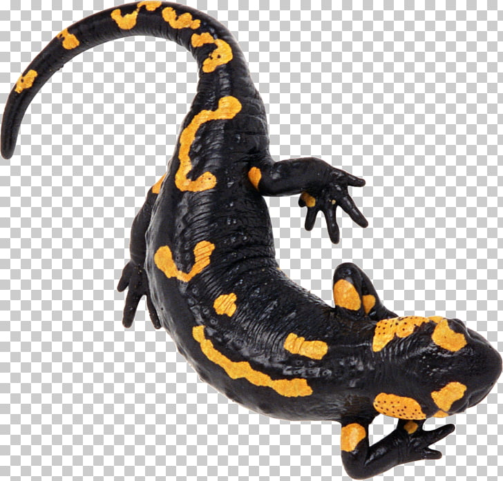 Tiger salamander clipart jpg royalty free stock Gila Monster Clipart tiger salamander 6 - 728 X 697 Free ... jpg royalty free stock