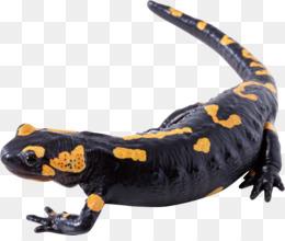 Tiger salamander clipart svg free Tiger Salamander clipart - 4 Tiger Salamander clip art svg free