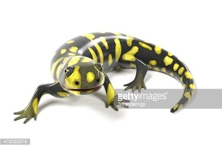 Tiger salamander clipart jpg freeuse stock Tiger Salamander premium clipart - ClipartLogo.com jpg freeuse stock