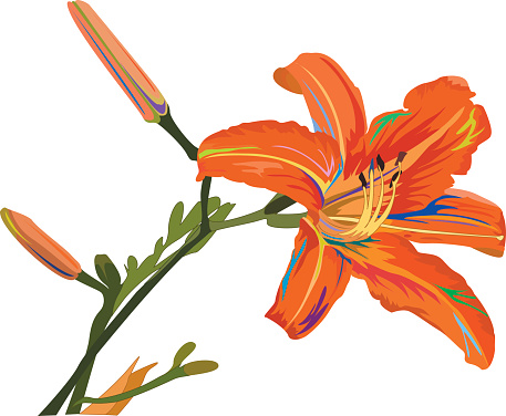 Tigerlily clipart vector free Free Tiger Lily Cliparts, Download Free Clip Art, Free Clip ... vector free