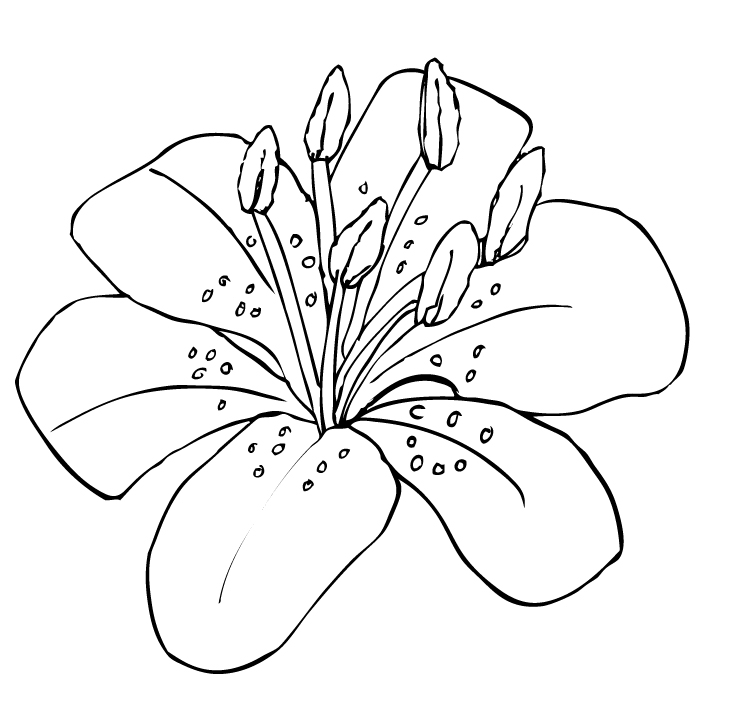 Tigerlily clipart transparent stock Free Tiger Lily Cliparts, Download Free Clip Art, Free Clip ... transparent stock