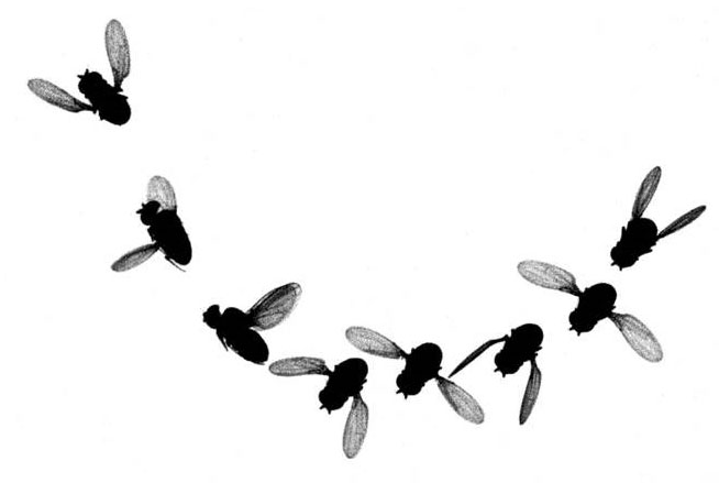 Tiny fly bug b&w clipart svg freeuse Black Fly Cliparts | Free download best Black Fly Cliparts ... svg freeuse
