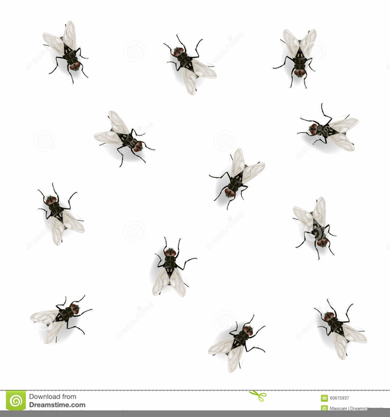 Tiny fly bug b&w clipart clip library stock Fly Clipart Black And White | Free Images at Clker.com ... clip library stock
