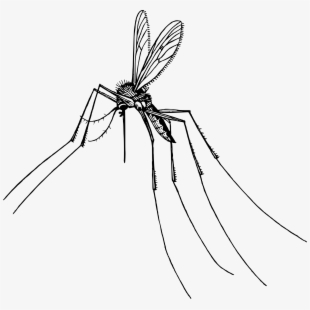 Tiny fly bug b&w clipart jpg library stock Fly Clipart Insect - Pest Control #321218 - Free Cliparts on ... jpg library stock