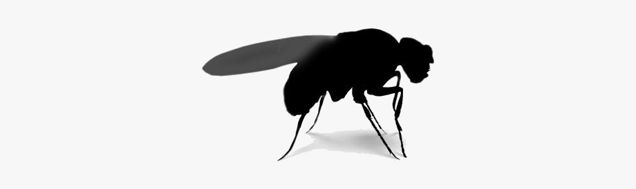Tiny fly bug b&w clipart graphic royalty free download Cartoon Fruit Fly Silhouette Png - Net-winged Insects ... graphic royalty free download