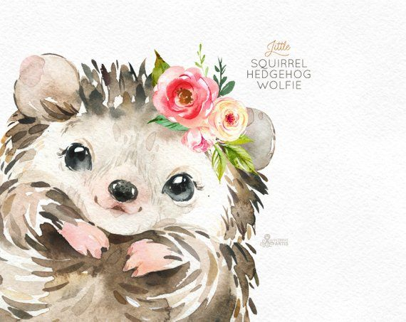 Tired hedgehog clipart png library Pequeña ardilla Erizo Wolfie. Acuarela animales clipart ... png library