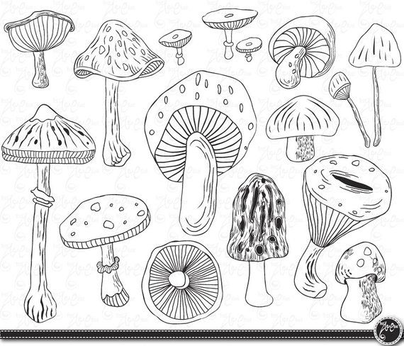 Toadstool clipart black and white png free download Mushroom clip art \