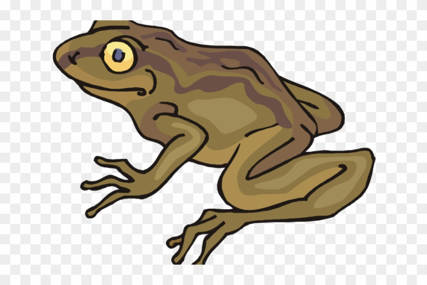 Toas clipart jpg transparent library Toad Clipart Simple - Clip Art, HD Png Download - 640x480 ... jpg transparent library