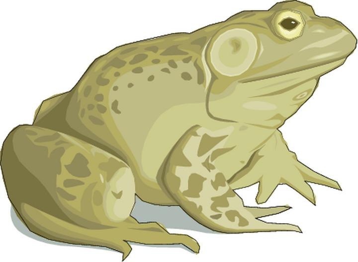 Toas clipart png transparent 72+ Toad Clipart | ClipartLook png transparent