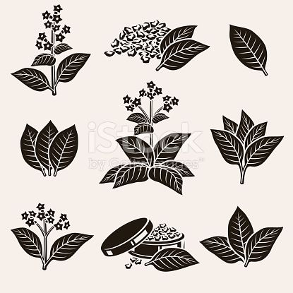 Tobacco leaf clipart vector freeuse library collection tobacco leaf set, editing size and color | Decor ... vector freeuse library