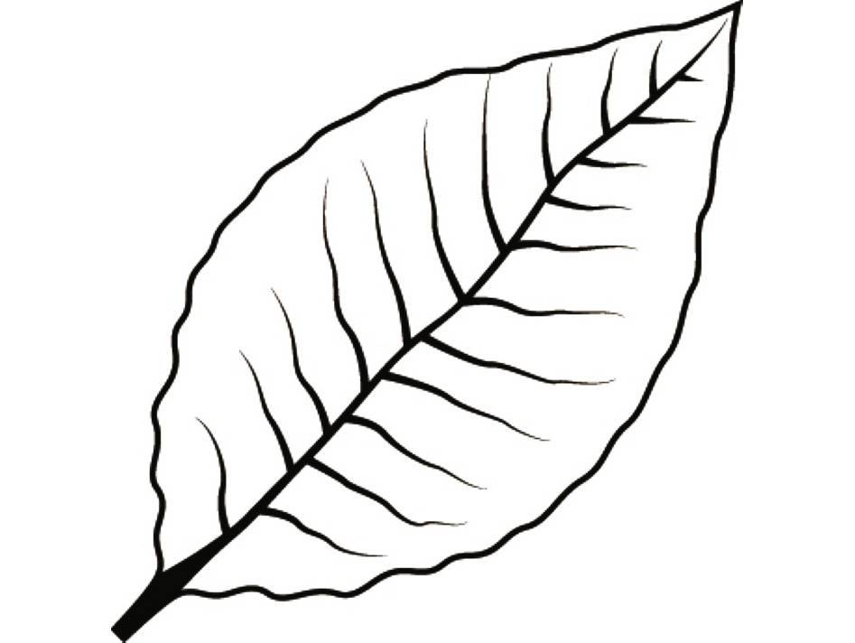 Tobacco leaf clipart image transparent library Tobacco leaf clipart 5 » Clipart Portal image transparent library