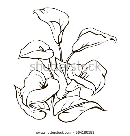Tolukuma gold mine clipart jpg library Calla lily flower lineart - 15 linearts for free coloring on ... jpg library
