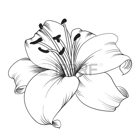 Tolukuma gold mine clipart png royalty free stock Calla lily flower lineart - 15 linearts for free coloring on ... png royalty free stock