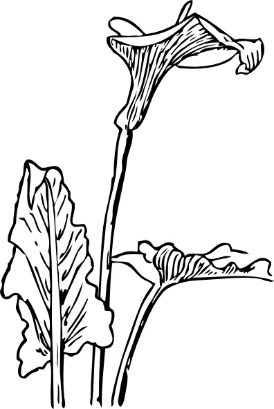 Tolukuma gold mine clipart banner transparent download Calla lily flower lineart - 15 linearts for free coloring on ... banner transparent download
