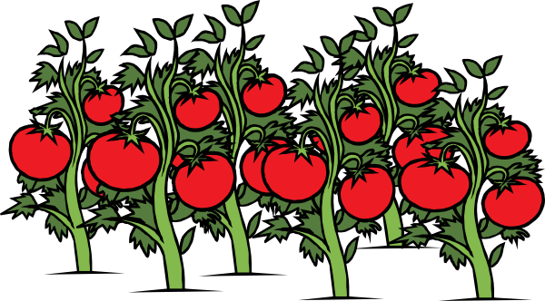 Tomatoes on the vine clipart vector download Free Tomato Vine Cliparts, Download Free Clip Art, Free Clip ... vector download