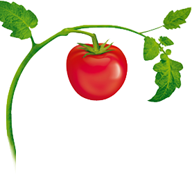 Tomatoes on the vine clipart image royalty free download Tomato Plant | Tattoos | Tomato tattoo, Friendship tattoos ... image royalty free download