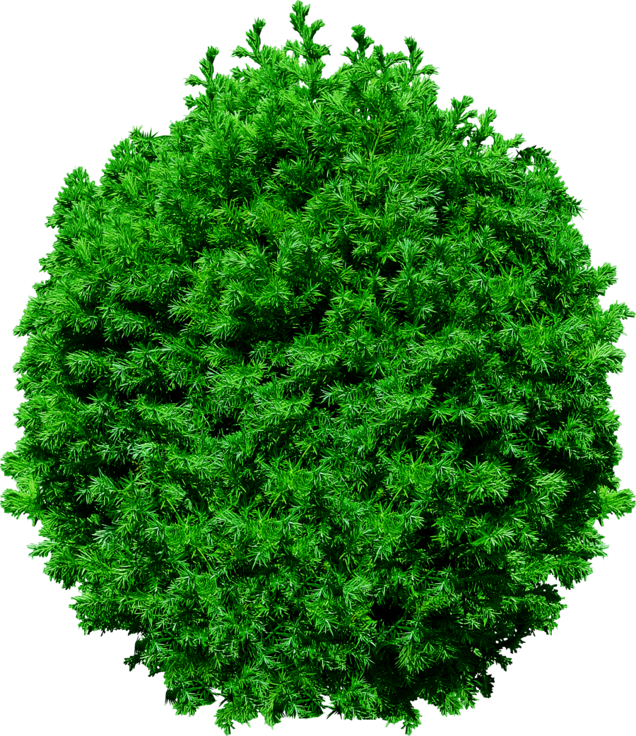 Top view tree clipart free download clipart royalty free download Banyan Tree Png - Top View Tree Png Free Download ... clipart royalty free download