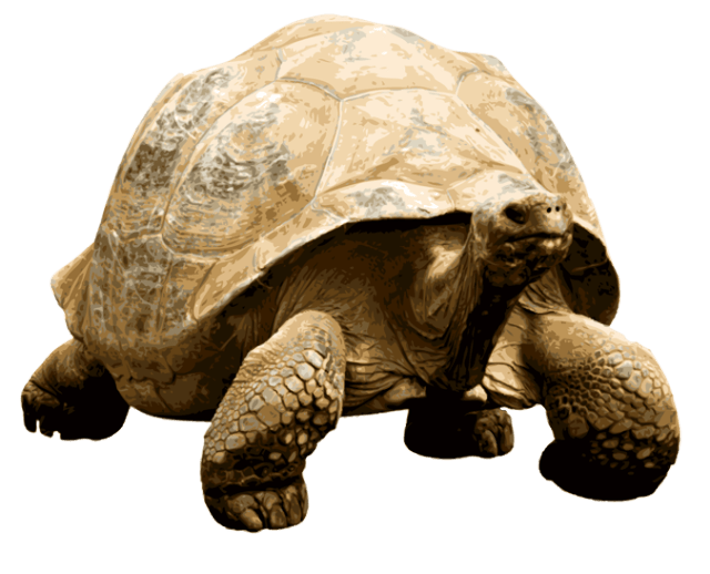 Tortoise cat clipart vector royalty free Tortoises transparent PNG images - StickPNG vector royalty free