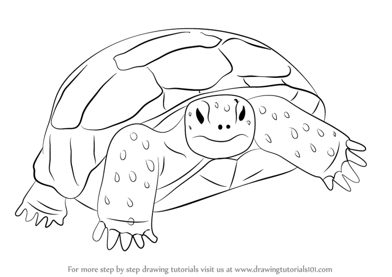 Tortoise gopher clipart vector transparent library Learn How to Draw a Gopher Tortoise (Turtles and Tortoises ... vector transparent library