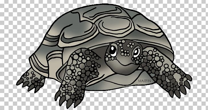 Tortoise gopher clipart clipart stock Georgia Box Turtle Gopher Tortoise Reptile PNG, Clipart ... clipart stock