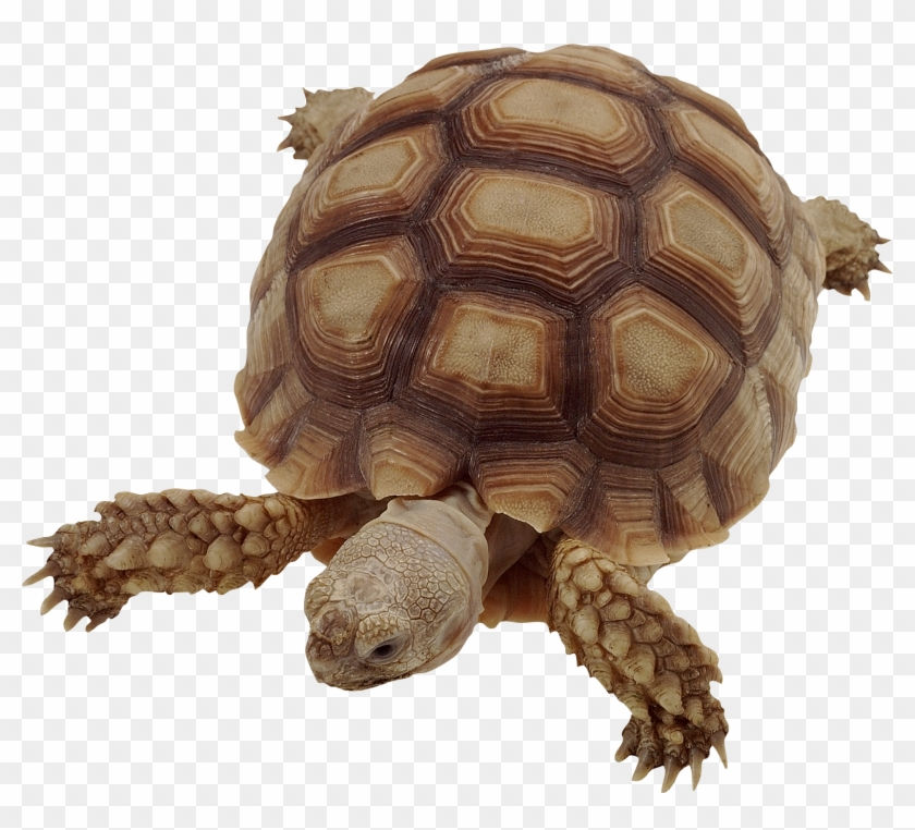 Tortoise gopher clipart graphic transparent download Clipart Turtle Gopher Tortoise - Движущиеся Картинки Для ... graphic transparent download