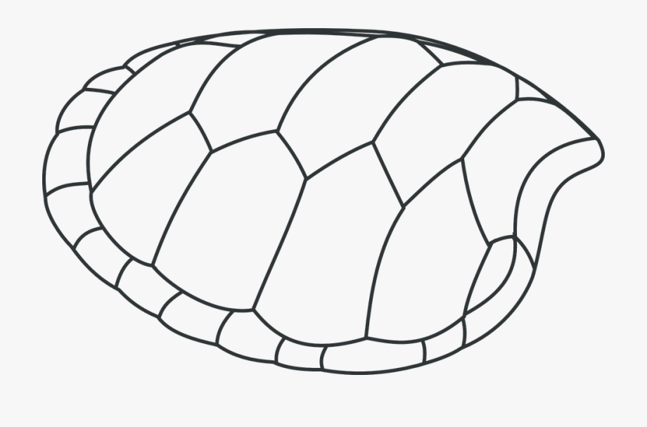 Tortoise shell clipart image black and white library Turtle, Shell, Patterns, Black And White - Water Animals ... image black and white library
