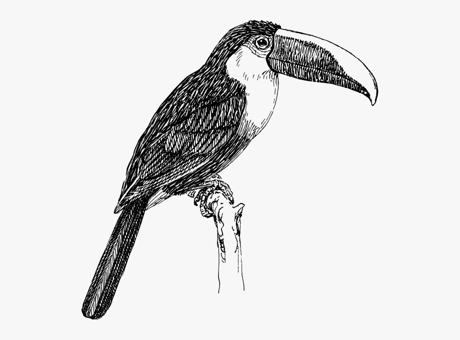 Toucan clipart black and white jpg library Black And White Toucan #252322 - Free Cliparts on ClipartWiki jpg library