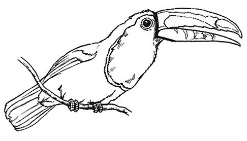 Toucan clipart black and white vector freeuse library Clipart Toucan - Cliparts.co vector freeuse library