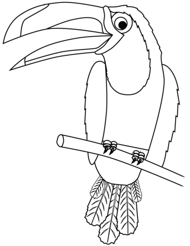 Toucan clipart black and white clipart transparent download Toucan coloring page | Free Printable Coloring Pages clipart transparent download
