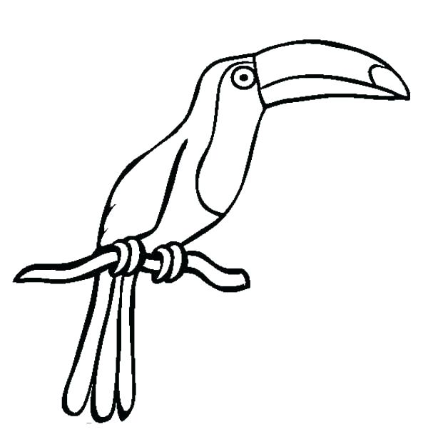 Toucan clipart black and white svg black and white download Toucan Bird Drawing | Free download best Toucan Bird Drawing ... svg black and white download