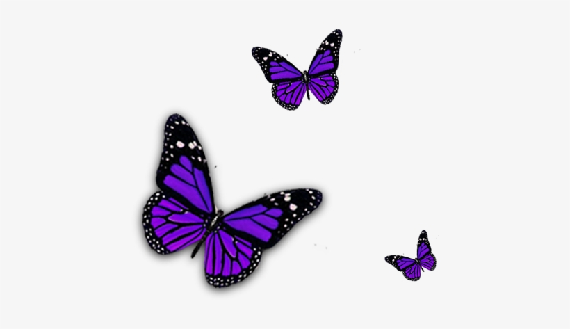 Transparent background butterfly clipart png vector freeuse stock Go Back > Pix For Purple Butterfly Png Clipart - Purple ... vector freeuse stock
