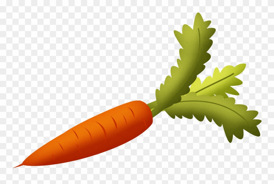 Transparent background carrot nose clipart clip art stock Carrot Clipart No Background - Carrot Clipart Transparent ... clip art stock