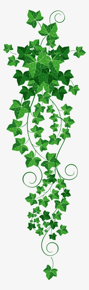 Transparent background ivy strand clipart image free download Ivy Vine PNG & Download Transparent Ivy Vine PNG Images for ... image free download