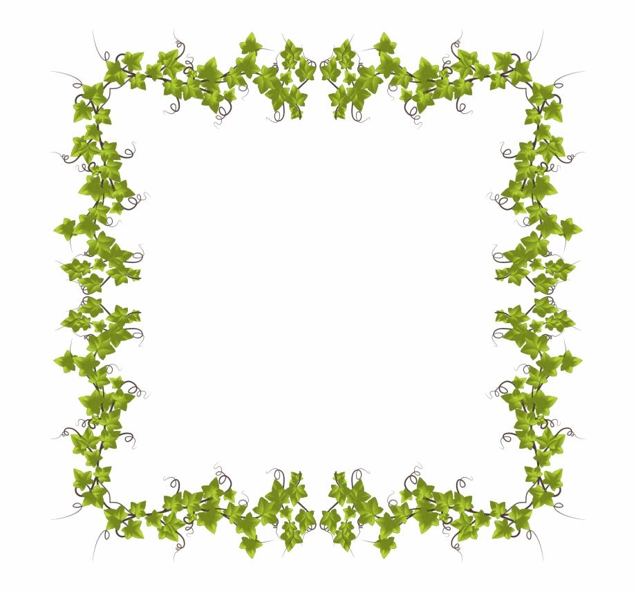 Transparent background ivy strand clipart png Ivy Leaves Frame - Text Border Flower, Transparent Png ... png