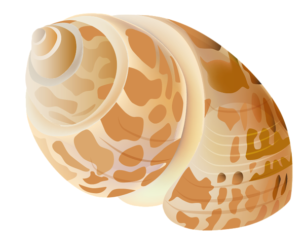 Transparent background png christmas seashell clipart royalty free download Small Rapana PNG Picture   Summer Vacation PNG - Clipart ... royalty free download