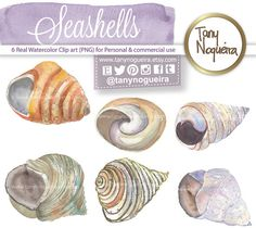 Transparent background png christmas seashell clipart clip transparent download Syrian hibiscus rose mallow Leaves Leaf clip art images watercolor ... clip transparent download