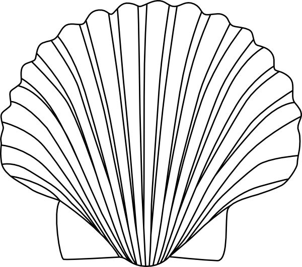 Transparent background png seashell clipart transparent download 17 Best images about Shells on Pinterest | Conch shells, Sea ... transparent download