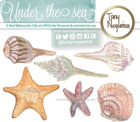 Transparent background png seashell clipart image download Pinterest • The world's catalog of ideas image download
