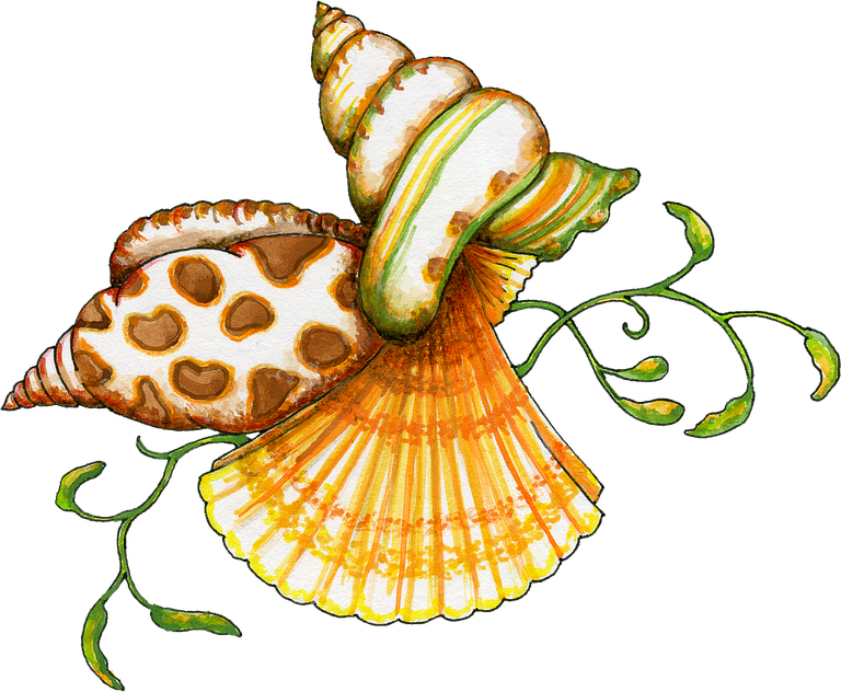 Transparent background png seashell clipart jpg royalty free download Free Transparent PNG files and Paint Shop Pro Tubes jpg royalty free download