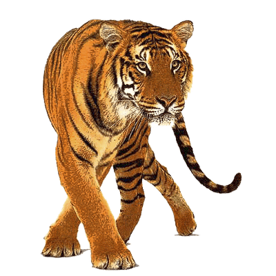 Transparent background tiger clipart clip library stock Tigers transparent PNG images - StickPNG clip library stock