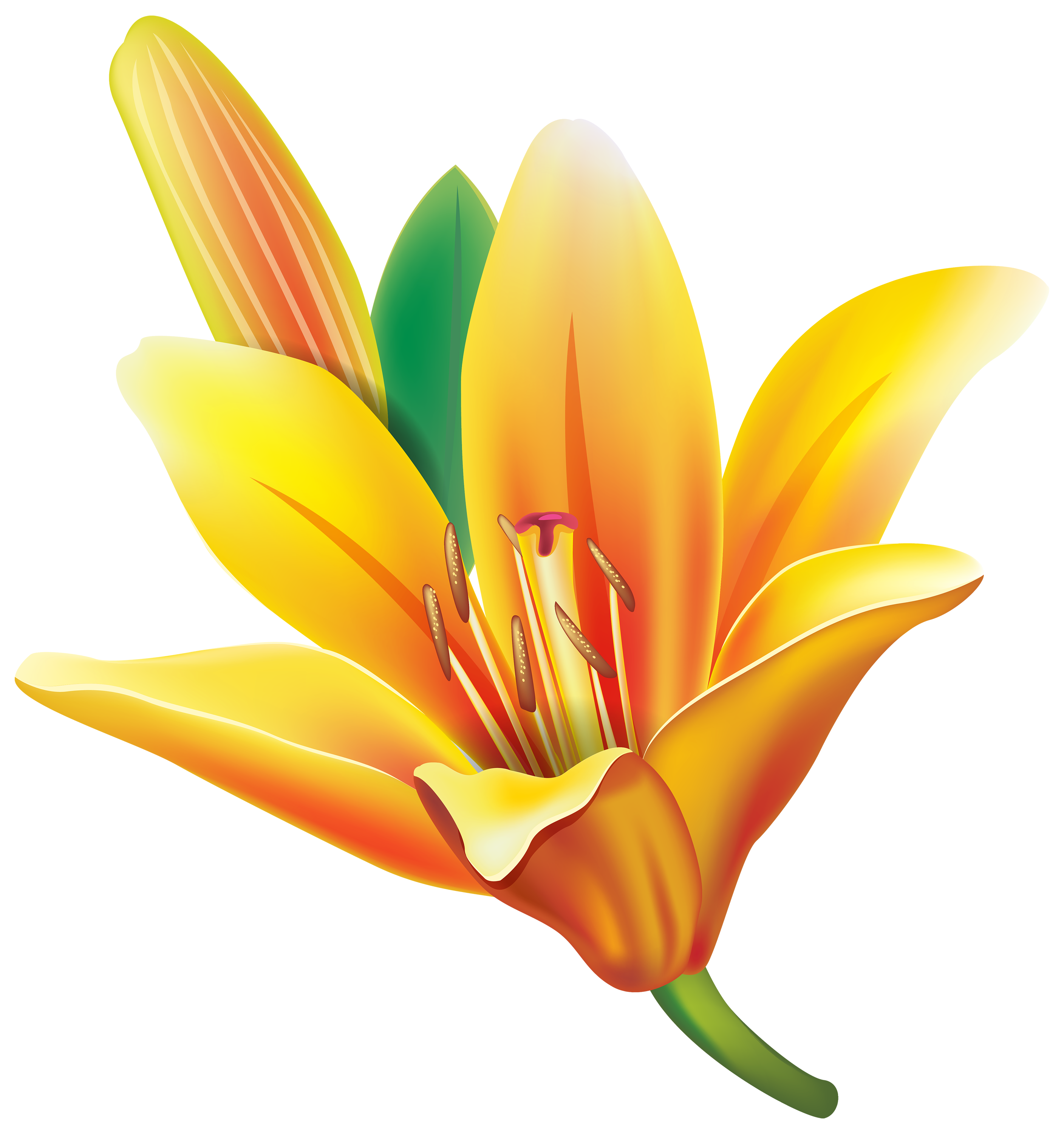 Lilies flowers clipart picture library stock Yellow Lily Flower PNG Clipart - Best WEB Clipart picture library stock