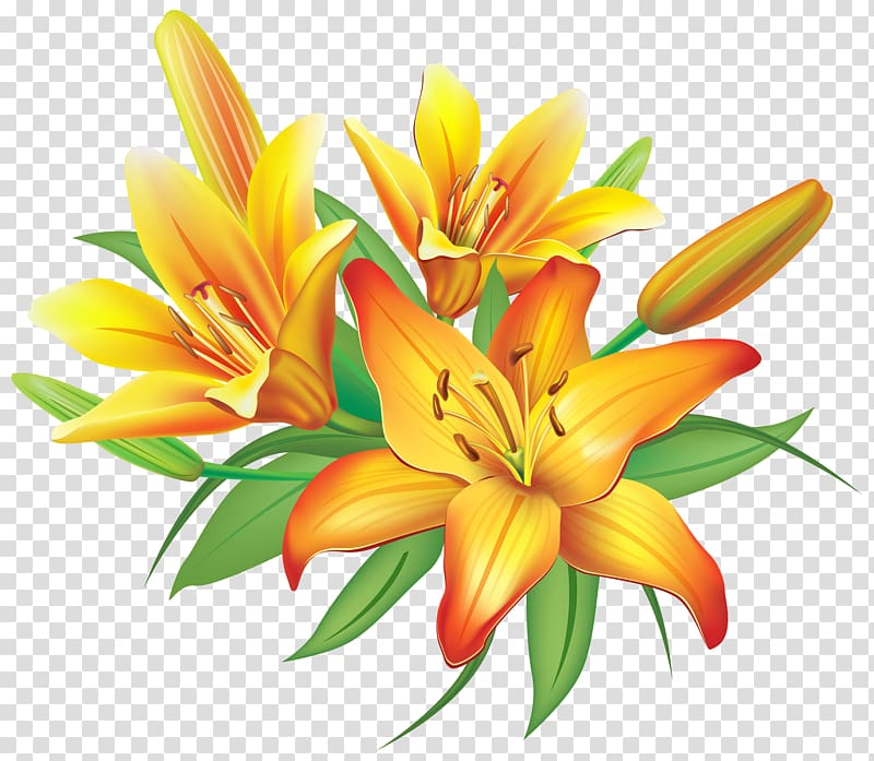 Lilies flowers clipart vector free Flower Yellow , Yellow Lilies Flowers Decoration , orange ... vector free