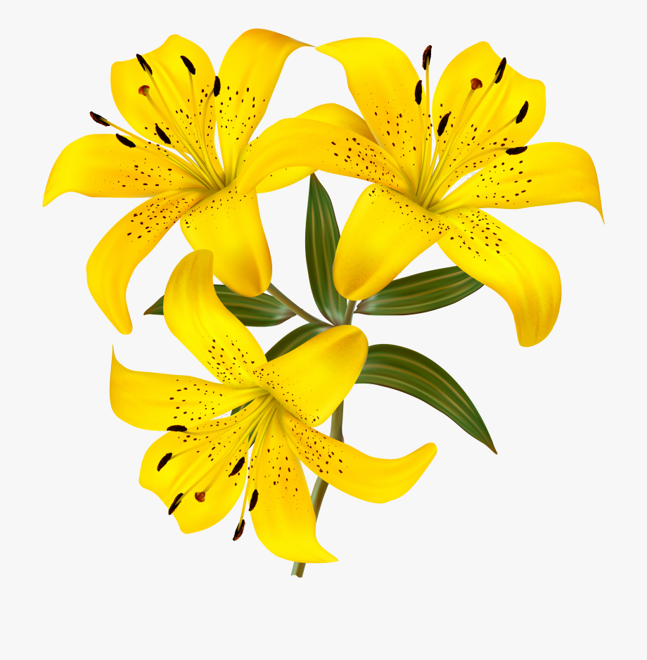Transparent background yellw lily clipart jpg Tiger Lily Clipart At Getdrawings - Yellow Lily Flower ... jpg