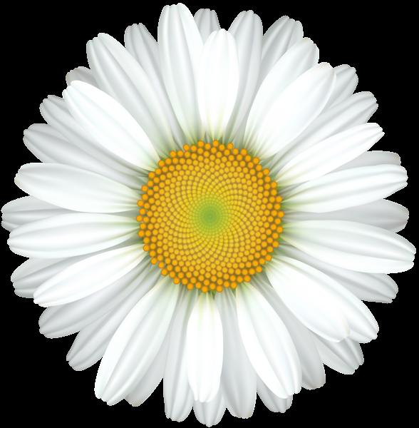 Transparent clipart daisy svg transparent library Daisy Flower Transparent Clip Art Image | 2018 Mothers day ... svg transparent library