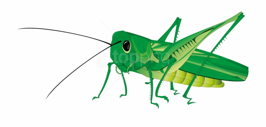 Transparent clipart grasshopper on grass svg royalty free stock Grasshopper Png Transparent Background - Grasshopper Clipart ... svg royalty free stock