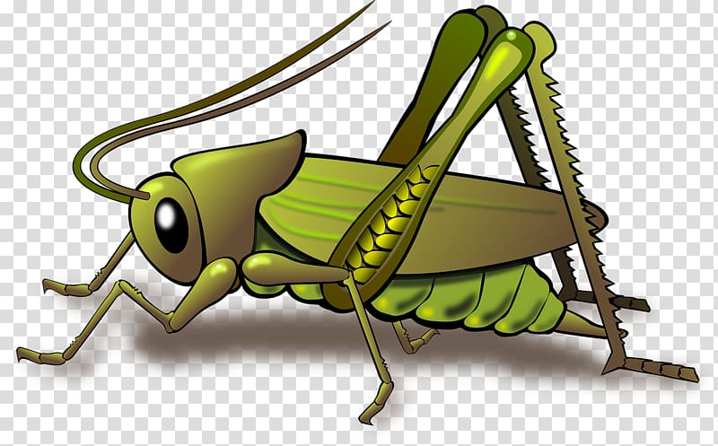 Transparent clipart grasshopper on grass png freeuse library Grasshopper Insect , Green cricket transparent background ... png freeuse library
