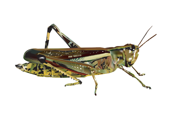 Transparent clipart grasshopper on grass clip art royalty free Download Grasshopper PNG Image 184 - Free Transparent PNG ... clip art royalty free