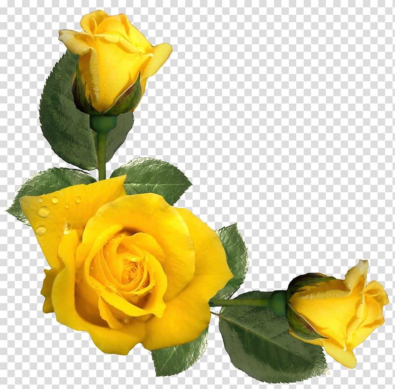 Transparent flower rose yellow clipart svg transparent download Yellow roses, Rose Yellow Flower , Beautiful Yellow Roses ... svg transparent download