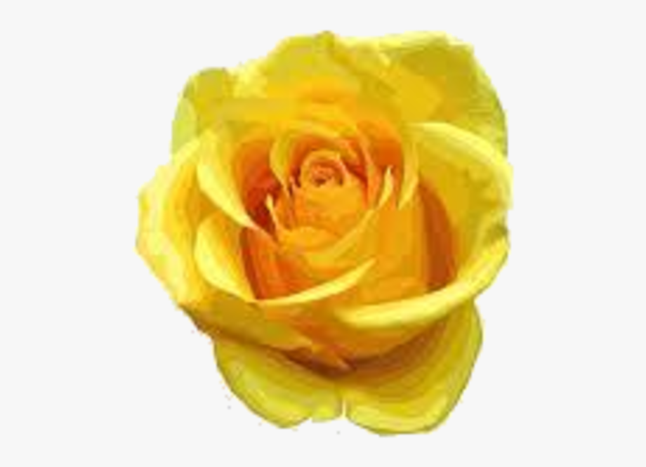Yellow Rose Clipart One Single - Yellow Flowers Rose ... clipart transparent download
